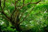 野|木々の緑