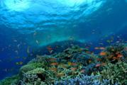 石垣北部は珊瑚がすごい!